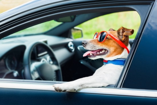 Doggone Good Auto Rates