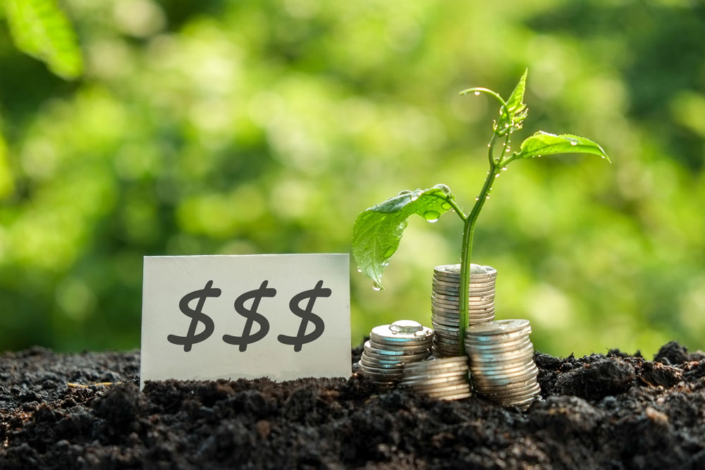 Savings Accounts at Solidarity - Growing Plant